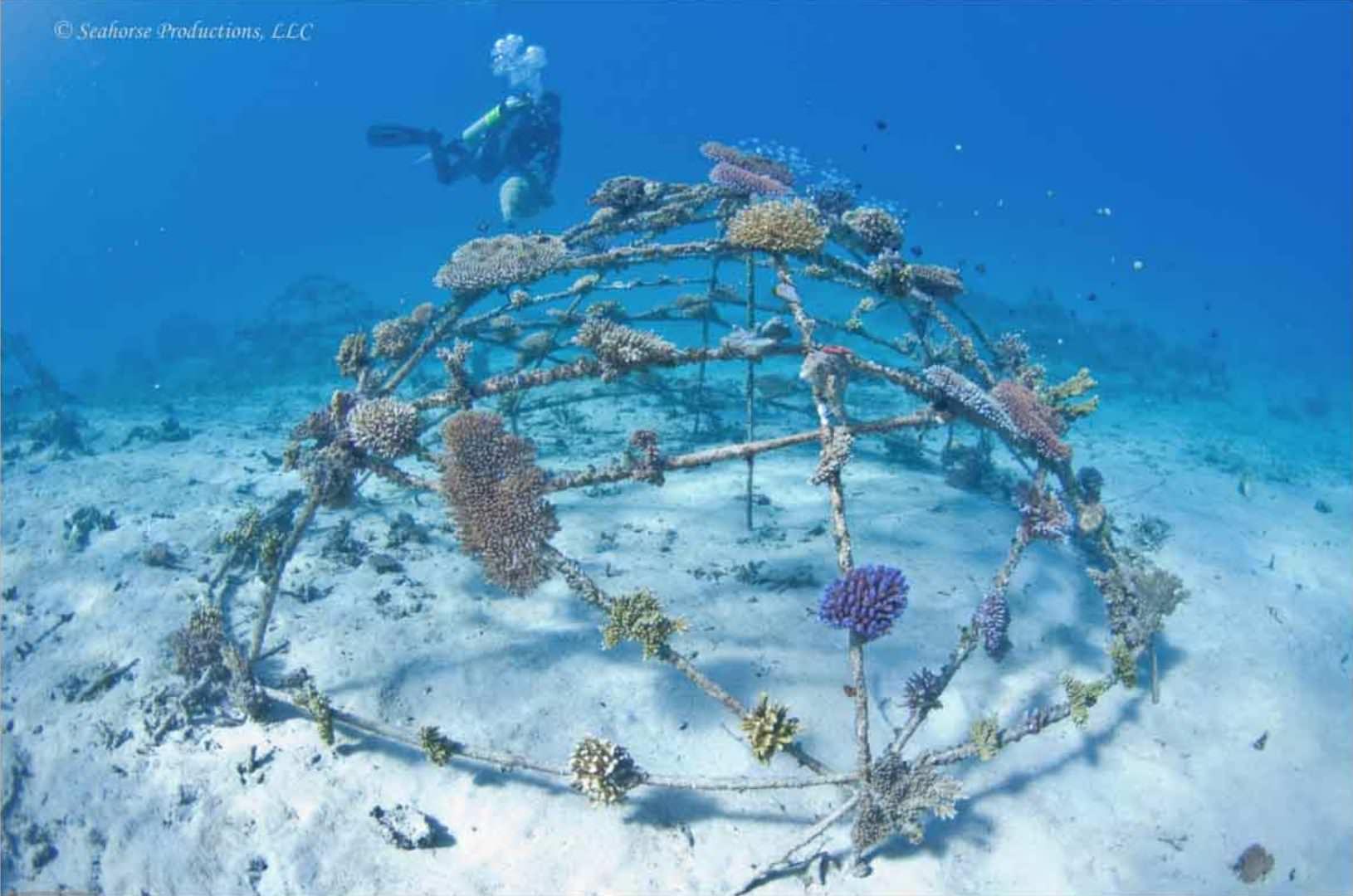 Gangga Divers Biorock project May 2009