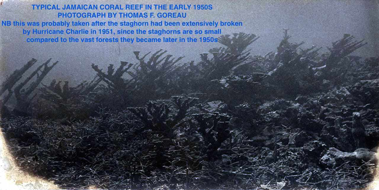 "The death of ""resilience"": Hurricane recovery of coral reefs destroyed by global warming, pollution, and pathogens"