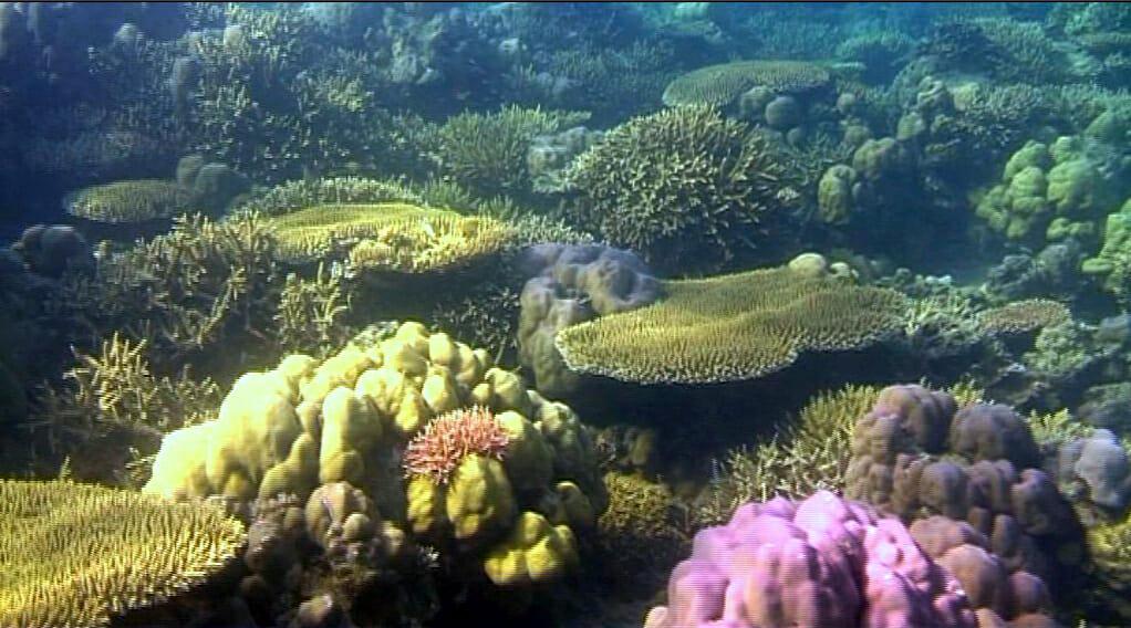Biorock, Pemuteran, Bali, Indonesia, mineral accretion, Goreau, Taman Sari