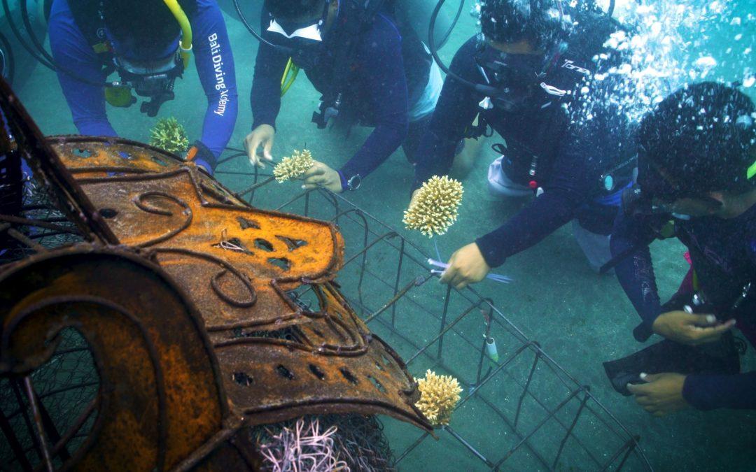 Biorock Barong And Rangda reef installed in honor of Agung Prana