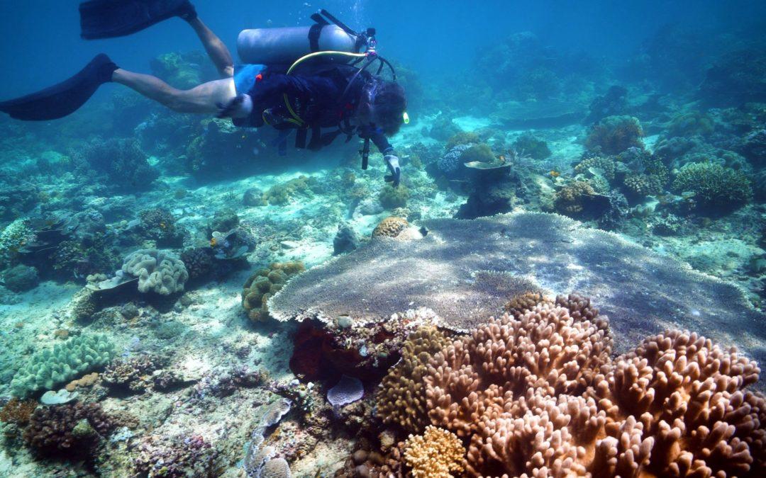 Recharging Indonesian marine biodiversity