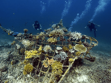 Retter der Riffe (Savior of the reefs) – Interview with Dr Tom Goreau