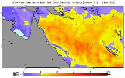 Great Barrier Reef bleaching should decrease in the coming weeks