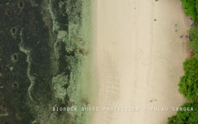 Climate-proofing Coastlines with Biorock Technology