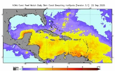 Entire Caribbean Sea about to bleach