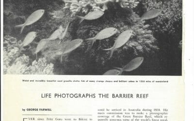 UNESCO: Great Barrier Reef 'in danger' from global warming and pollution