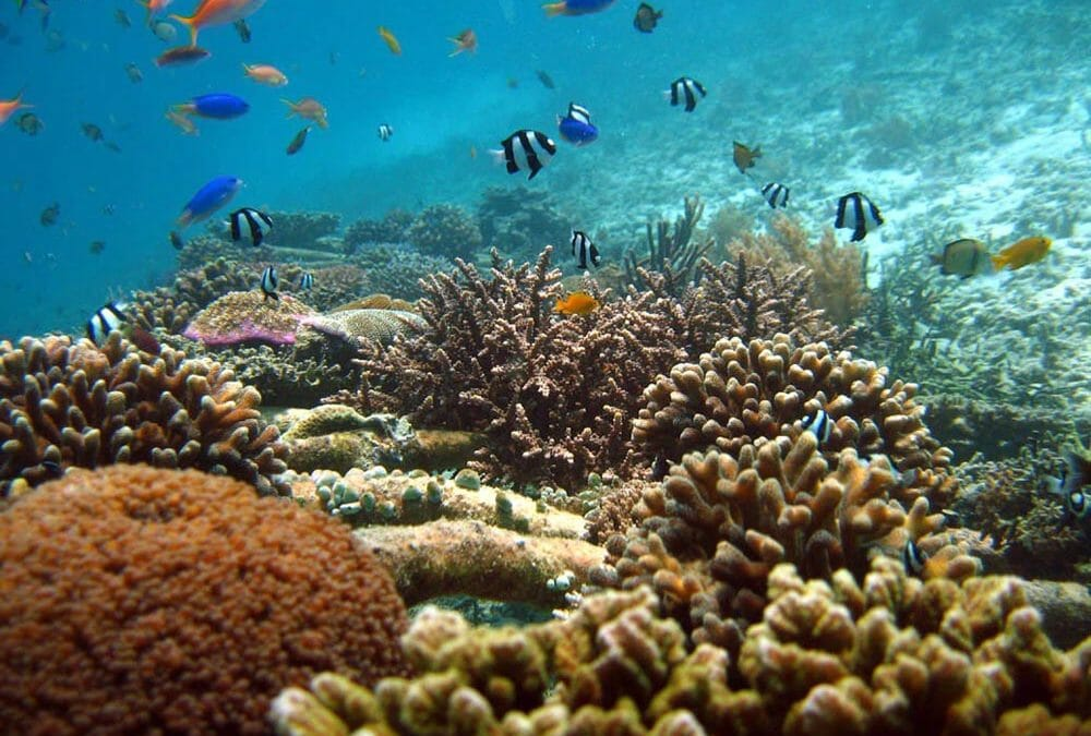 Biorock reefs unaffected by severe bleaching events